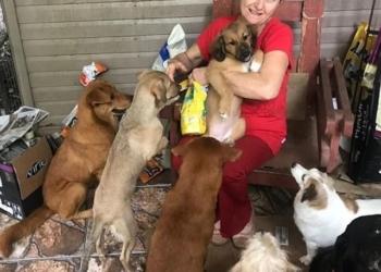 """Quando se mudou para a chácara onde mora, Glaci cuidava de """"apenas"""" 22 cães Fotos: Arquivo pessoal"""