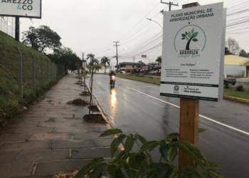 Mudas na Av. Brasil receberam placas para divulgar o programa de participação da comunidade Foto: Henrique Ternus