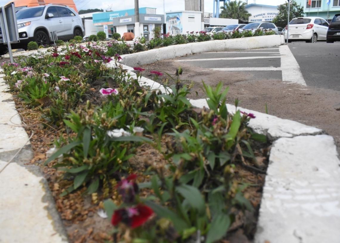 Flores decorativas ajudam a embelezar a área central do município Fotos: Keila Massaia/Prefeitura de Nova Hartz