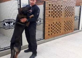 Na Penitenciária de Arroio dos Ratos, cães atuam na busca de narcóticos e na vigilância externa - Foto: Divulgação / Seapen