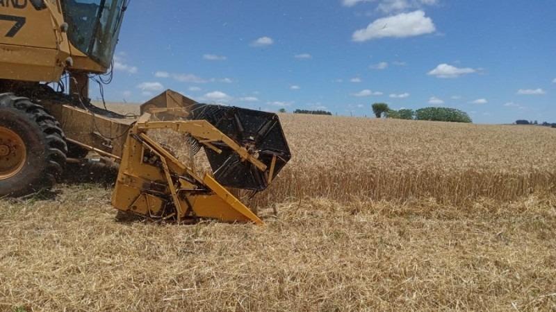 As lavouras que não foram prejudicadas pelas geadas de agosto apresentaram produtividade dentro da expectativa - Foto: Divulgação / Emater
