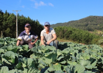 Produtores são fundamentais para crescimento da arrecadação dos índices de ICMS da agricultura Foto:  Arquivo/JR