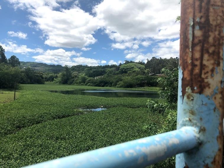 Aguapés tomam conta de boa parte do lago junto à ponte no bairro Aurora  Fotos: Melissa Costa
