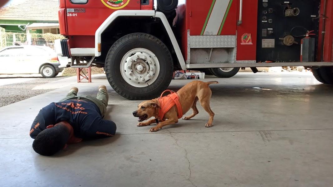 Primeira etapa do treinamento contou com ações práticas e participação de cão  Foto: Melissa Costa