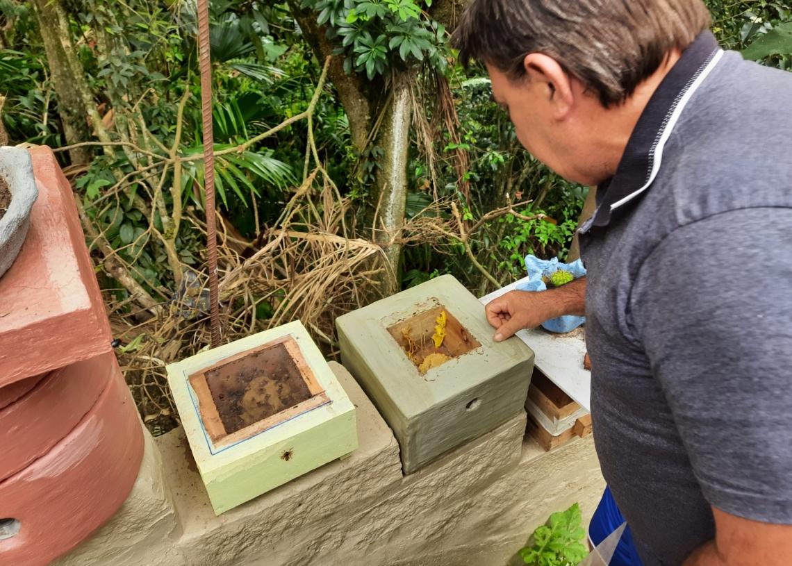 Vilmar observando suas caixas com colmeias de abelhas sem ferrão - Foto: Henrique Ternus
