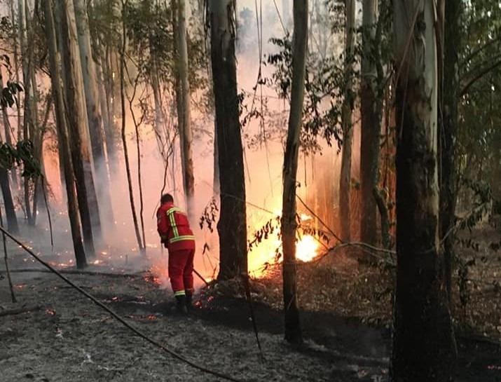 Equipe atendeu mais de 80 incêndios  durante todo o ano (Foto: Bombeiros de Nova Hartz)