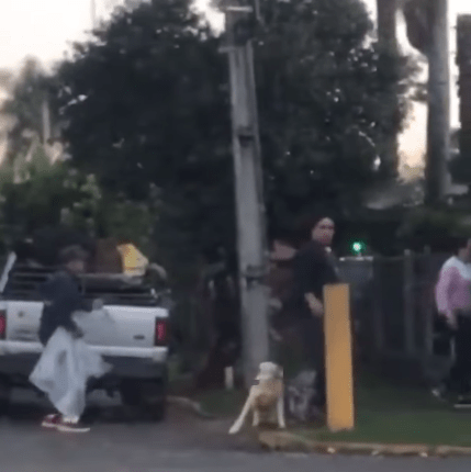 Vídeo flagrando a agressão foi divulgado nas redes sociais (Foto: Reprodução)