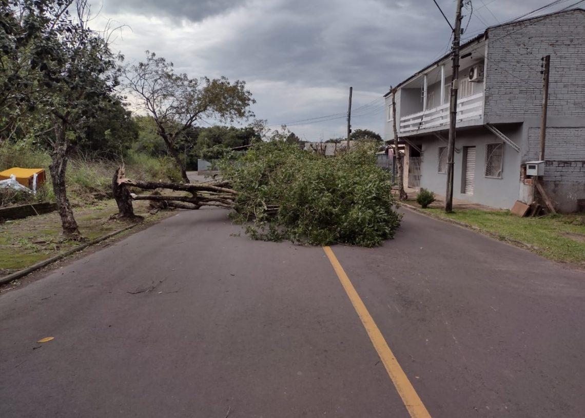Duas árvores caíram na rua Marquês de Olinda (Foto: Divulgação)